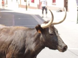 Vaquilla en el encierro de la calle Zaragoza